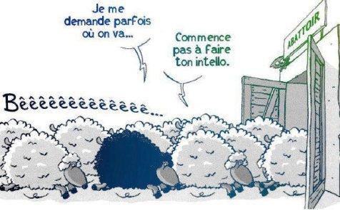 """Résultat de recherche d'images pour """"photos de troupeaux de moutons devant l'abattoir"""""""